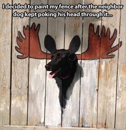 dogs fence funny moose tricky - 7926378496