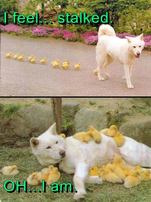 cute chicks dogs stalked