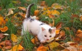 autumn kitten kittens in leaves leaves squee spree fall