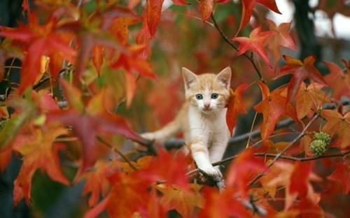 autumn kitten kittens in leaves leaves squee spree fall