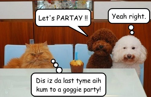 Let's PARTAY !! Yeah right. Dis iz da last tyme aih kum to a goggie party!
