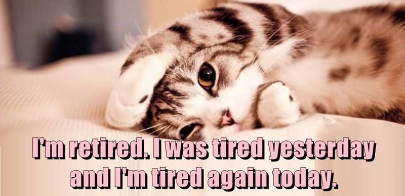 funny cat memes lolcats lol funny cats Cats funny cat memes - 7927045