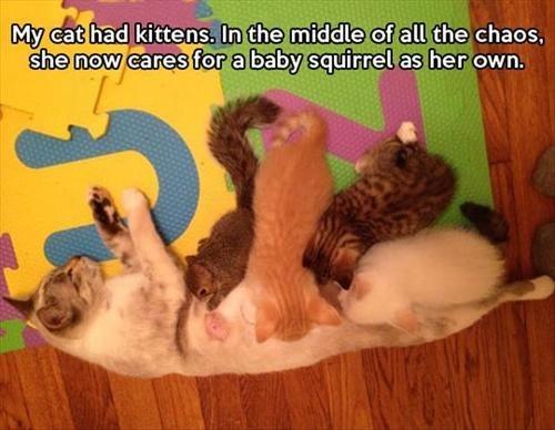 Cats kids kitten parenting squirrels - 7927207168