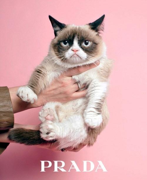 Grumpy Cat fashion - 7927752704