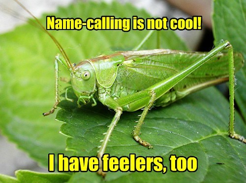 feelings,puns,grass hopper