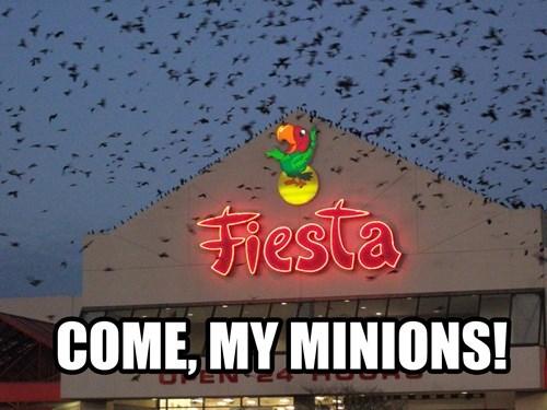 birds fiesta come my minions - 7928221696