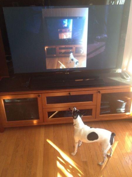 dogs photobomb - 7929097728