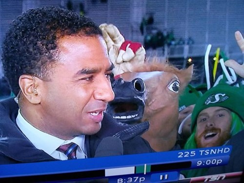 horse mask,photobomb