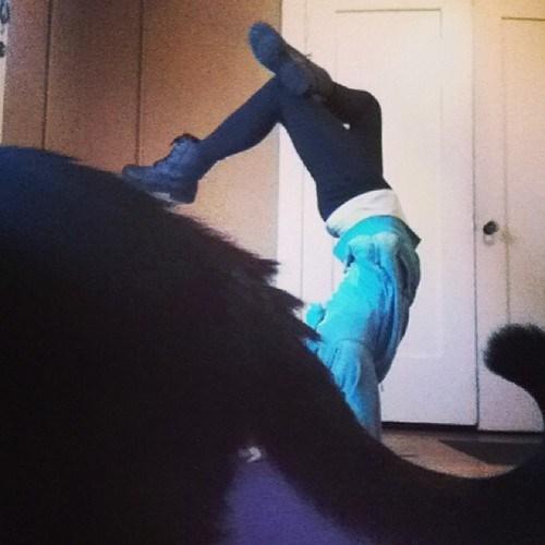 Cats photobomb yoga - 7929126656