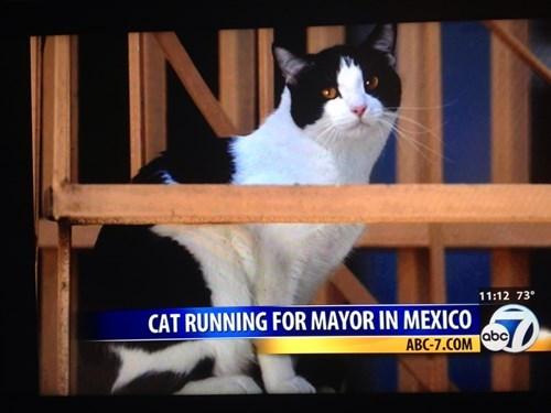 wtf Cats funny politics - 7929217536