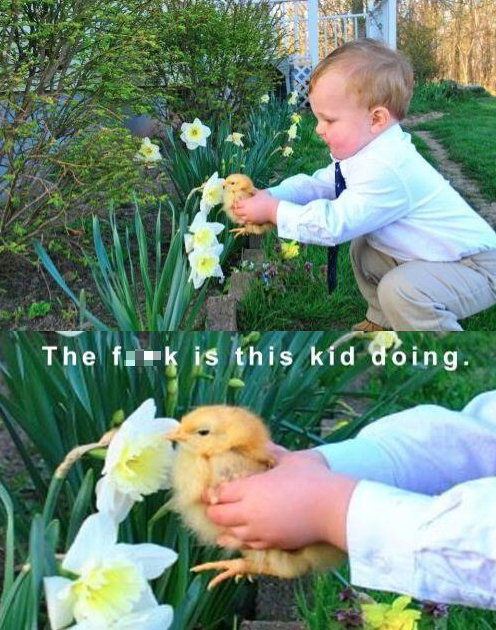 animals,duck,little kids