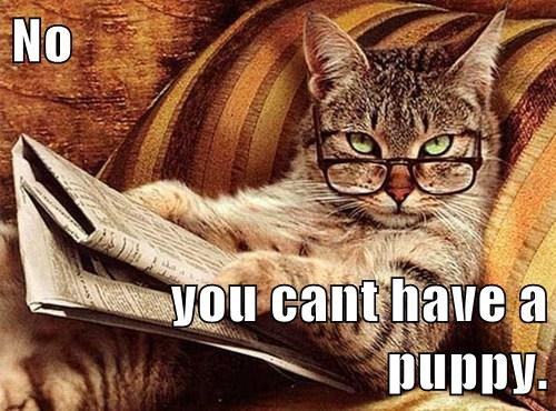 Cats glasses puppy news paper reading - 7929747200