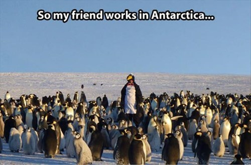 costume,antarctica,disguise,penguins,work
