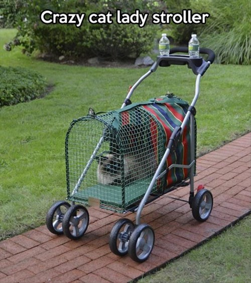 Cats,crazy cat lady,stroller