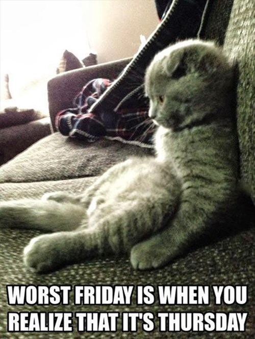 Cats,disappoint,fridays,thursdays,sit