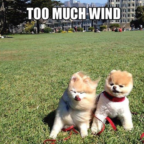 cute dogs models wind too much