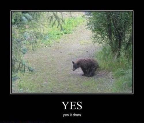 bears poop sayings woods - 7929865472
