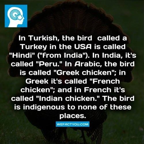 language funny Fun Fact Turkey wtf School of FAIL g rated - 7930811904