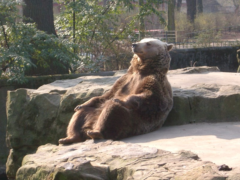 brown bear bears photoshop chill funny photoshop battle - 793093