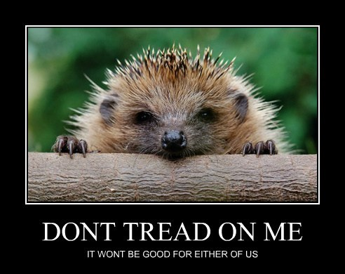 cute porcupines funny hedgehogs - 7930965760