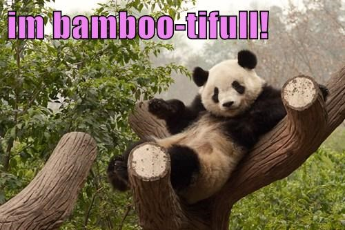 bamboo,puns,panda