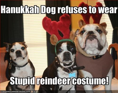costume,dogs,fashion,hanukkah,pets