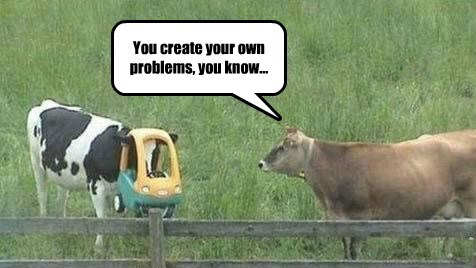 accident cars cows funny - 7932960256
