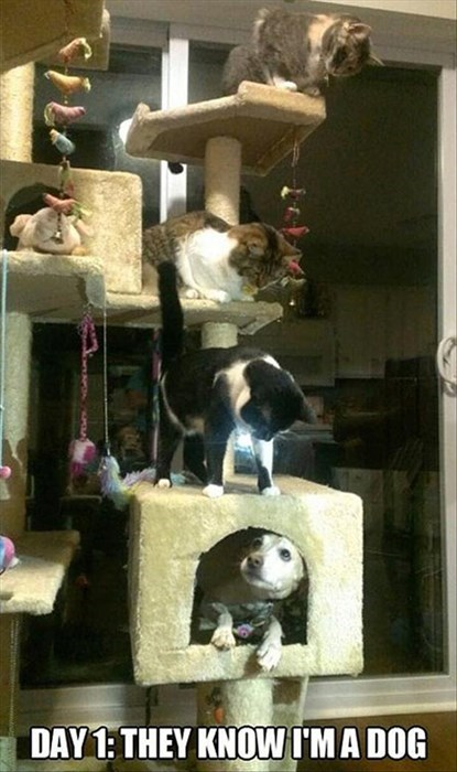 cat tree,Cats,dogs,fooled,mistake