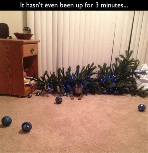 Cats christmas christmas tree funny mischief - 7933147136