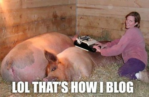 funny pig type writer hogs - 7933149184