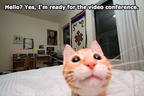 camera,Cats,cute,funny,conference call