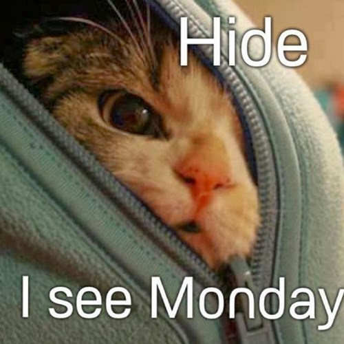 Cats funny monday hide - 7933206784