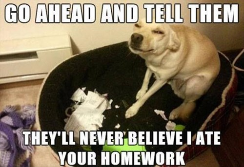 dogs excuses funny homework screwed - 7933218560