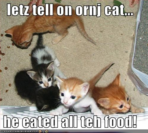letz tell on ornj cat...  he eated all teh food!