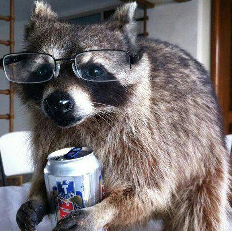 beer crunk critters funny tecate raccoons - 7934639104