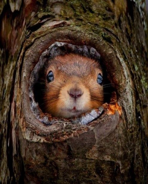 cute burrow home tree squirrels squee - 7934655488