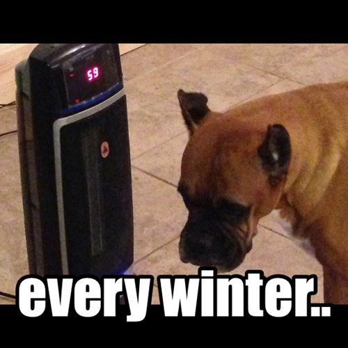 dogs,cold,heater,winter