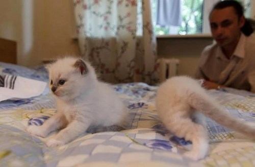 photobomb kitten perfectly timed Cats - 7934845696