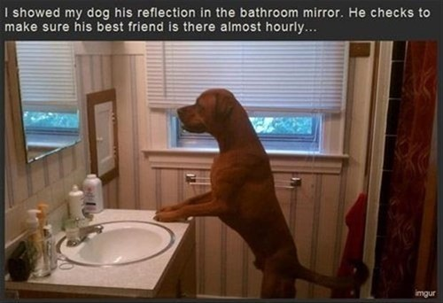 dogs narcissist mirror narcissus reflection vain - 7934892800