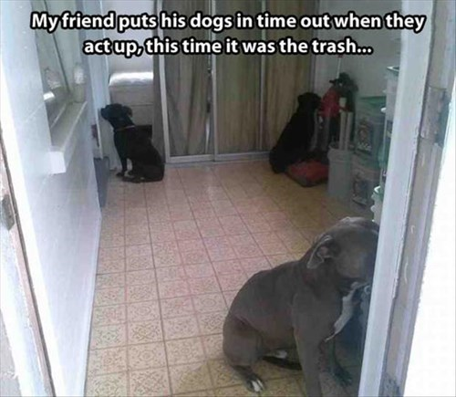 dogs,cute,punishment,corner