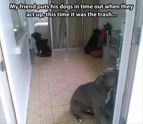 dogs cute punishment corner - 7934898944