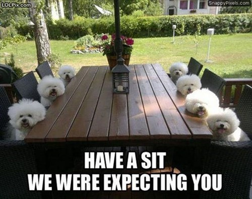 dogs,intervention,table,expecting you,funny