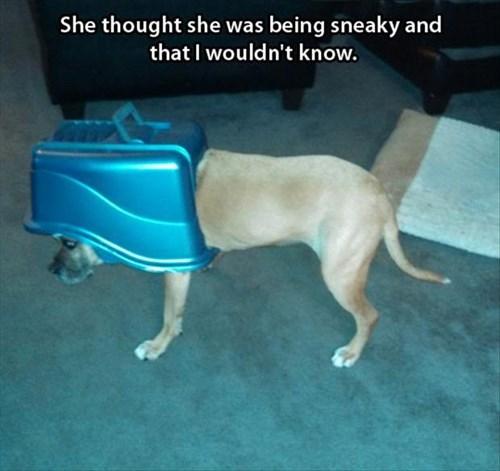 caught dogs gross litter box - 7934919168