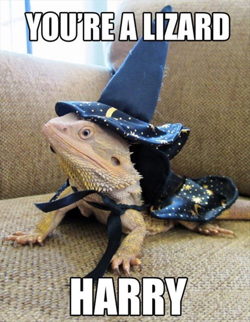 Harry Potter puns wizard lizard - 7934925568