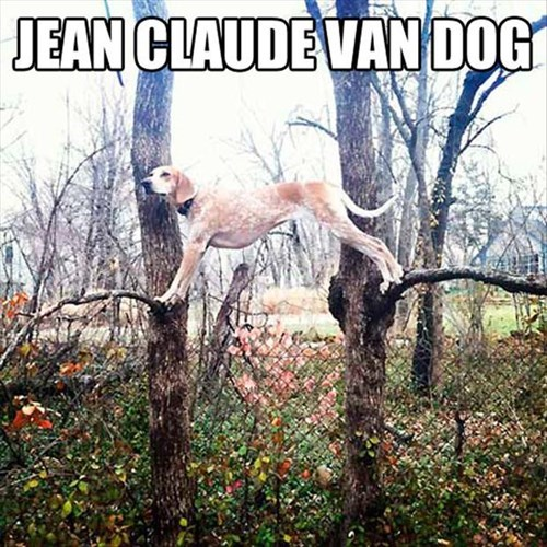 dogs movies puns Jean-Claude Van Damme parodies - 7934945024