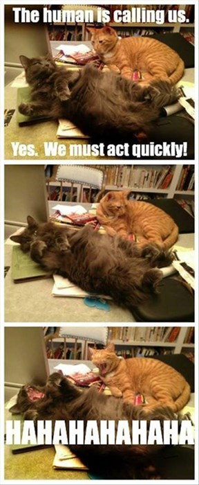 mock lazy Cats sarcasm funny - 7934947072