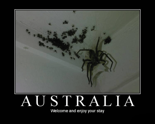 spiders scary wtf australia funny - 7934991360