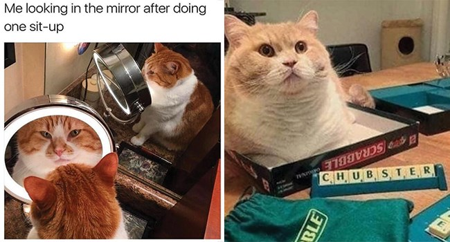 cat memes for caturday