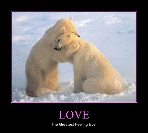 cold,snow,polar bears,love