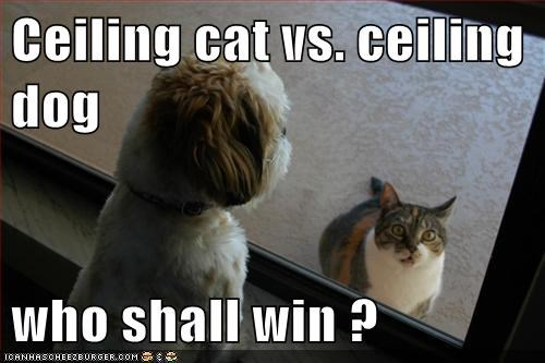 Cats contest dogs ceiling - 7936078336
